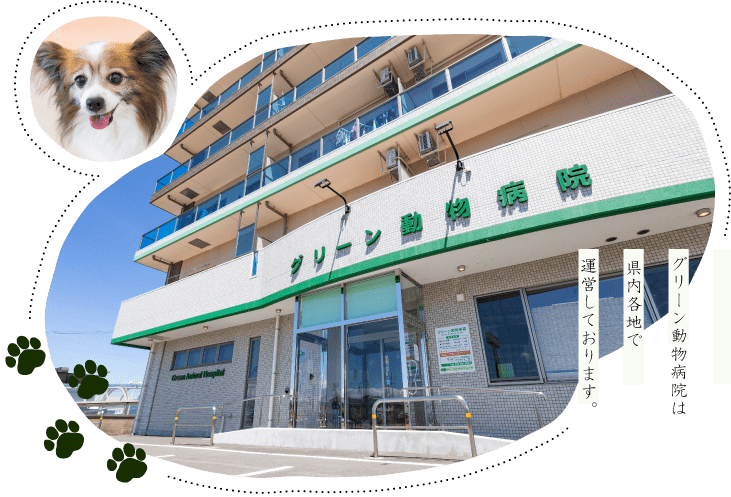 グリーン動物病院は県内各地で運営しています。