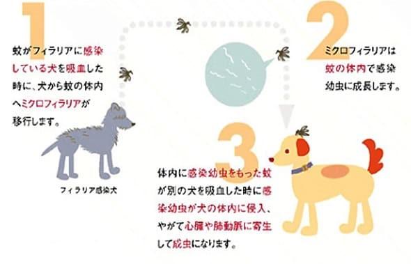 フィラリア症感染の流れの図