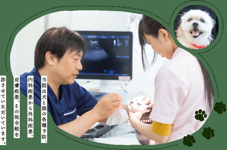 当院は犬と猫の各種予防、内科疾患から外科疾患、皮膚疾患、その他全般を診させていただいています。