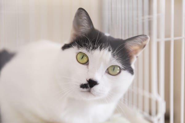 看板猫ラブの写真